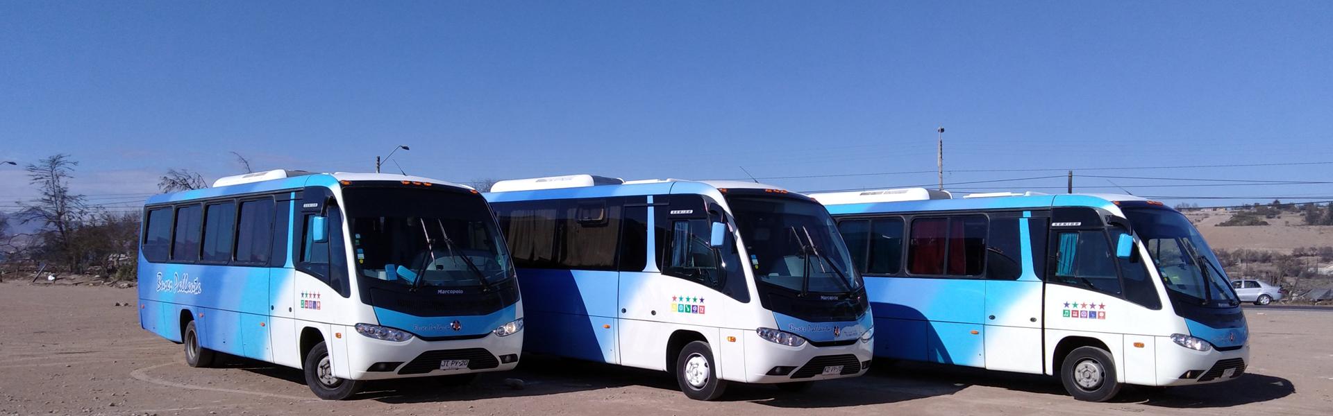 Buses Pallauta